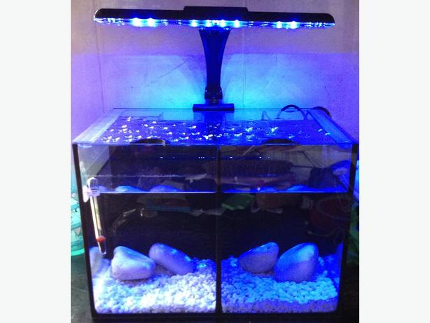 Fish tank coseley wolverhampton for Split fish tank
