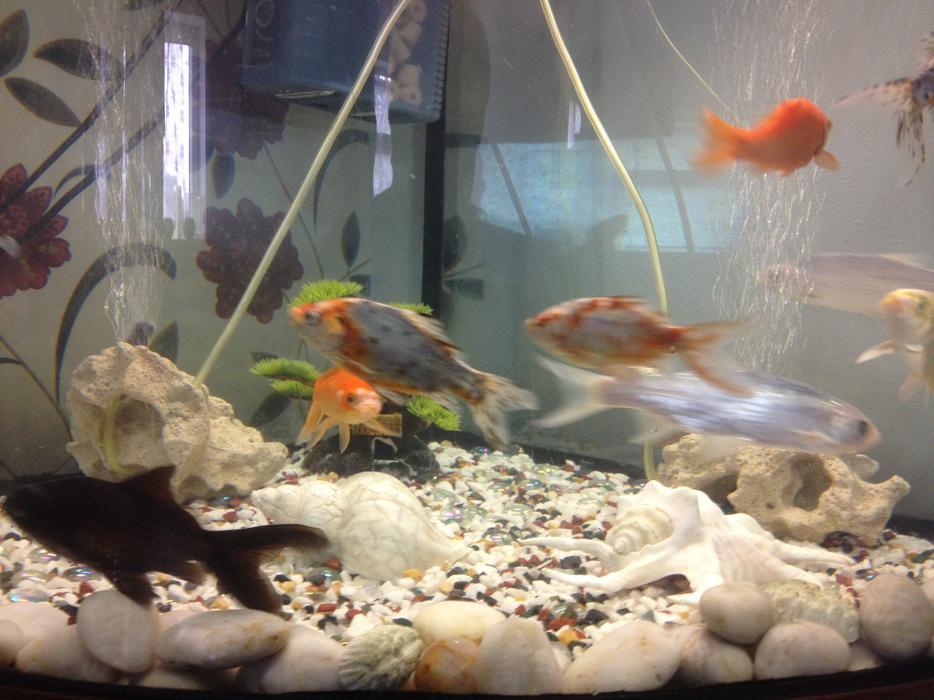 Corner fish tank with stand and 16 fish stourbridge for Tap tap fish corgi