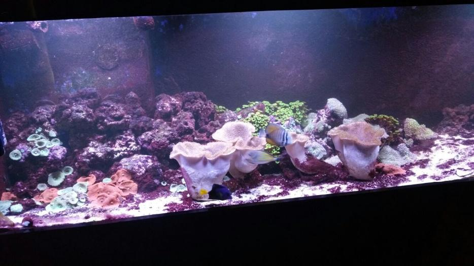 Marine fish and live rock for sale rowley regis wolverhampton for Live saltwater fish for sale