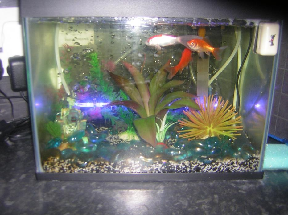 Tank all extras four cold water fish wednesfield for Cold water aquarium fish