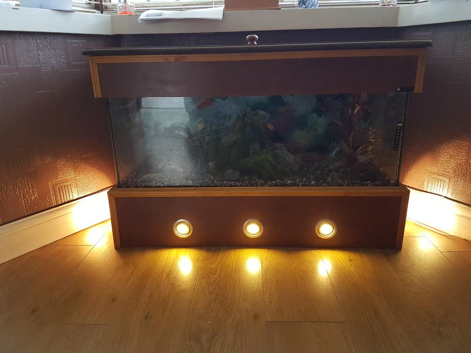 Fish tank sandwell wolverhampton for Tap tap fish corgi