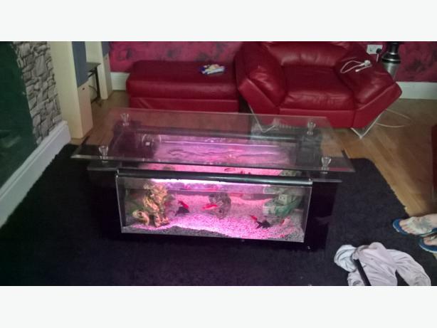 Coffee table fish tank wolverhampton wolverhampton - Fish tank coffee table amazon ...