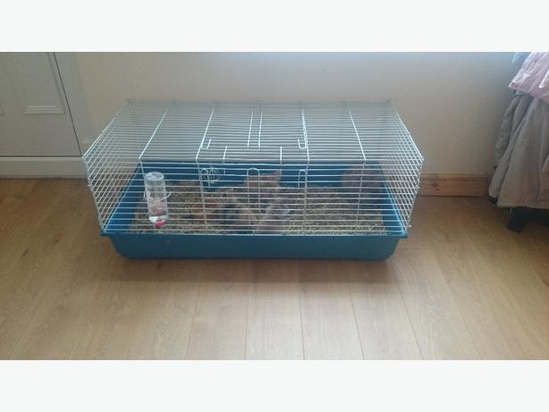 4ft 2 tier cage for sale