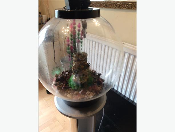 60ltr biorb tank and stand