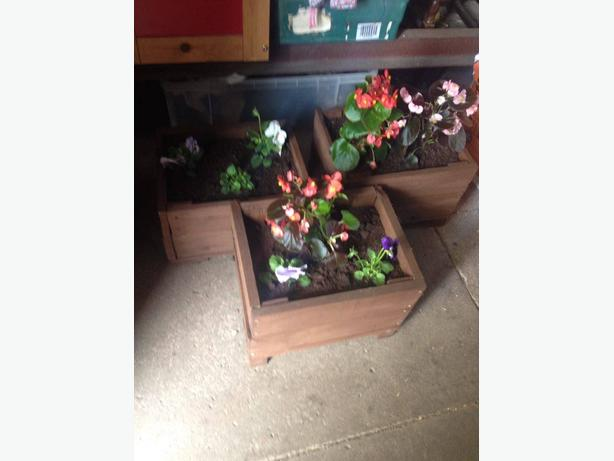 garden planters including plants
