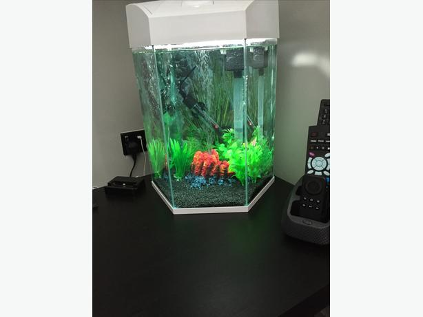aquarium fishtank in excellent condition full set up