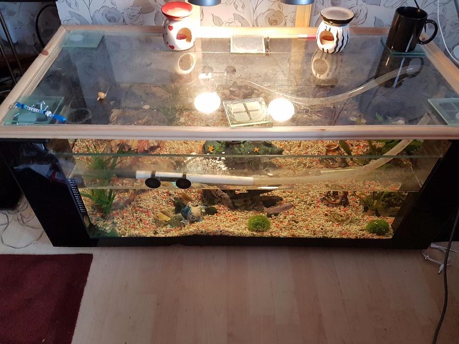 Coffee table fish tank brownhills dudley for Tap tap fish corgi