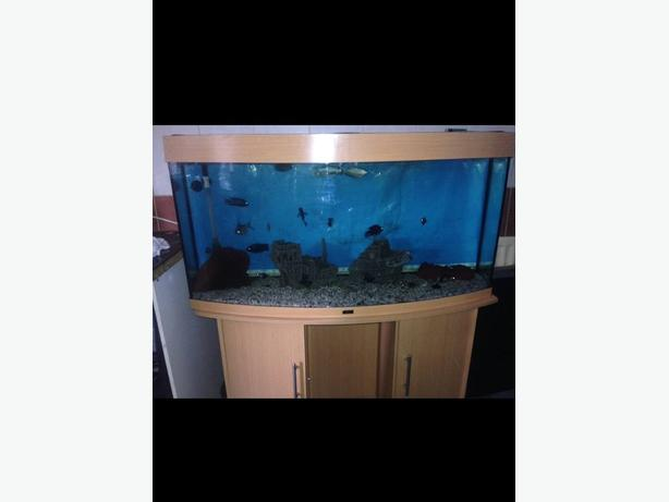 jewel bowfront tropical fish tank