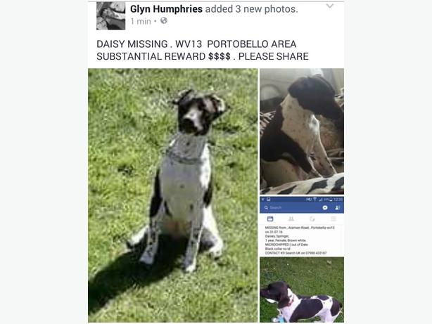 LOST DOG WV13 large reward