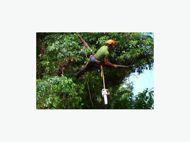*Experienced Professional* *Tree Surgeon* Available For A Fast Service*