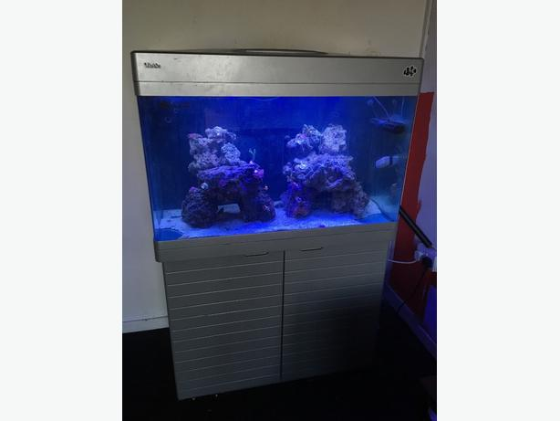 🐠🐠🐠 RED SEA MAX 250 full set up 🐠🐠🐠
