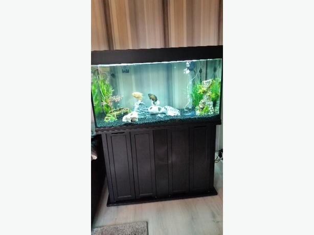 3ft full set up fish tank
