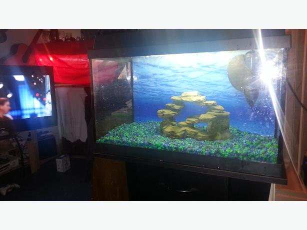 2ft Juwel fish tank with stand