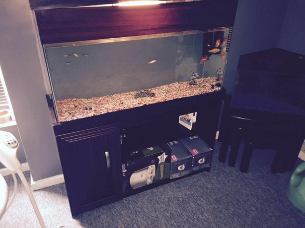 3ft by 1ft fish tank