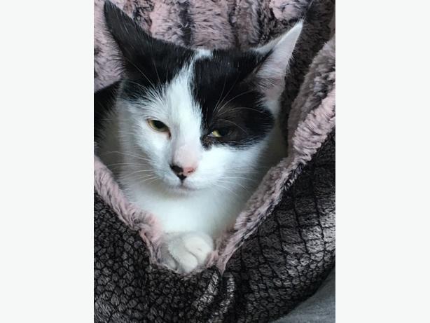 kitten 6 months old