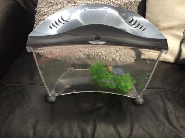 Fish tank rowley regis dudley for Tap tap fish corgi