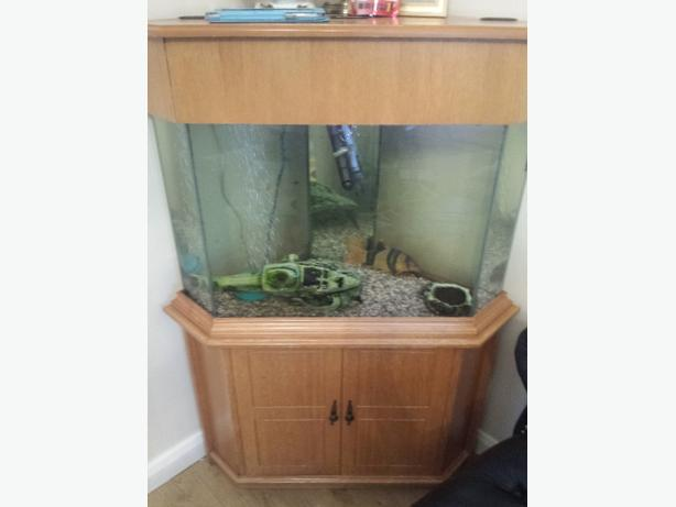 Large tropical fish tank with accessories for sale dudley for Tall fish tanks for sale