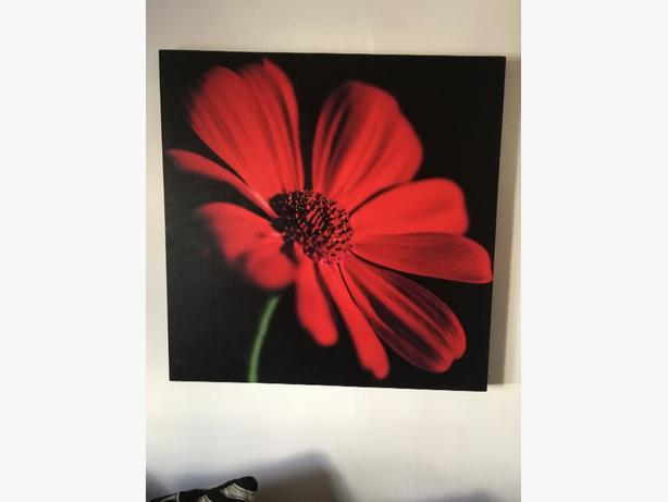 Next poppy canvas x 2 RRP £150