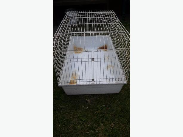 rabbit cage well used but still good con