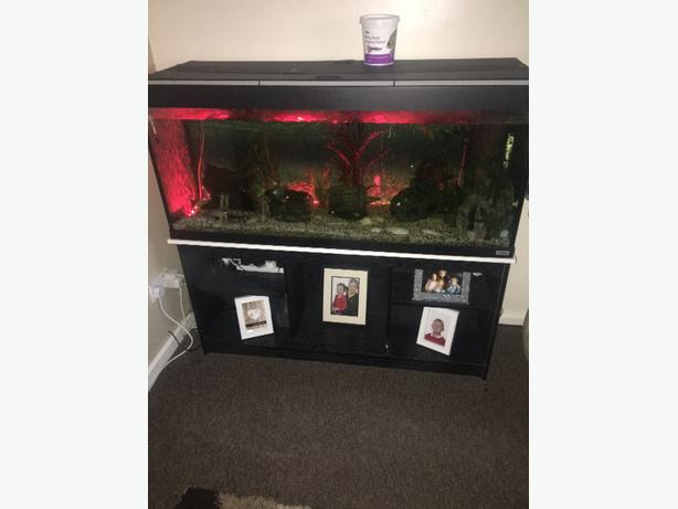 4ft fish tank with fish & unit