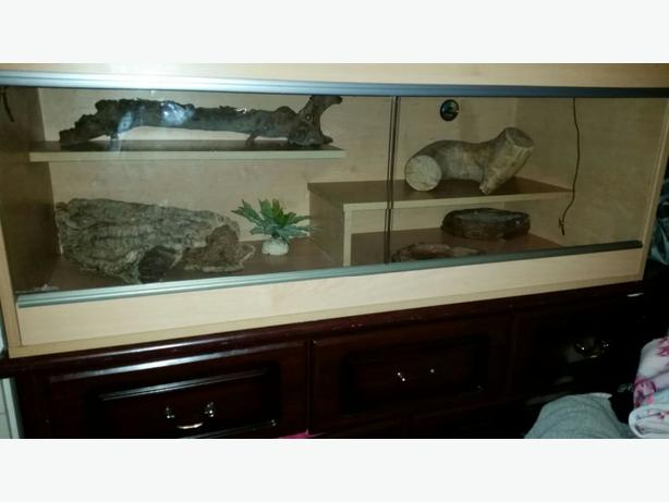 ×2 vivs for sale or swap for fish tank