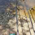 2x carp rods and reels