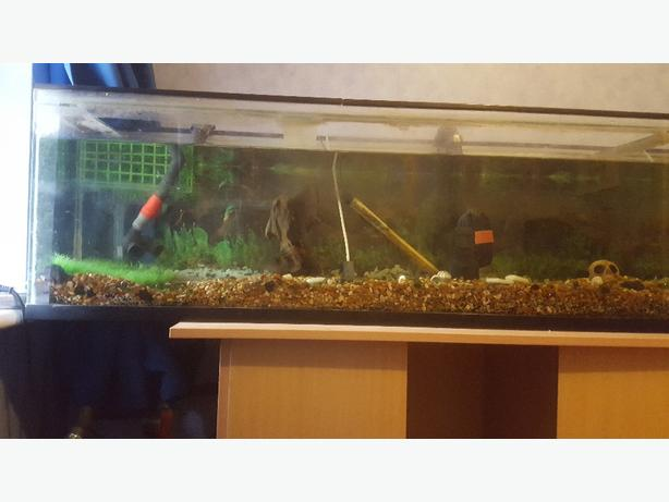 6x1x2ft fish tank with accessories