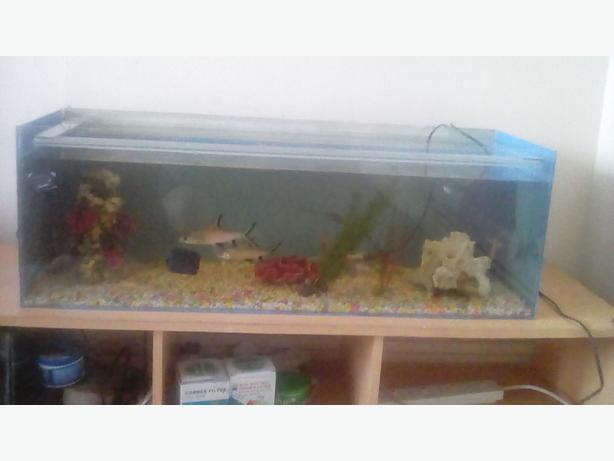 3ft full setup fish tank walsall dudley for Fish tank paint