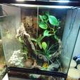 dart frogs and setup
