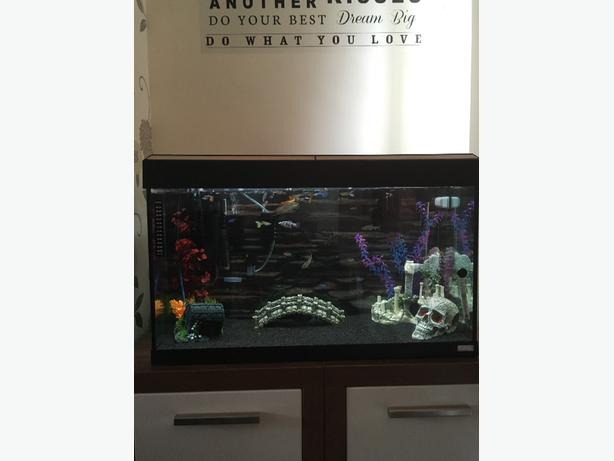 2.5 ft flual fish tank loads of fish