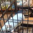 baby celestrial parrolets