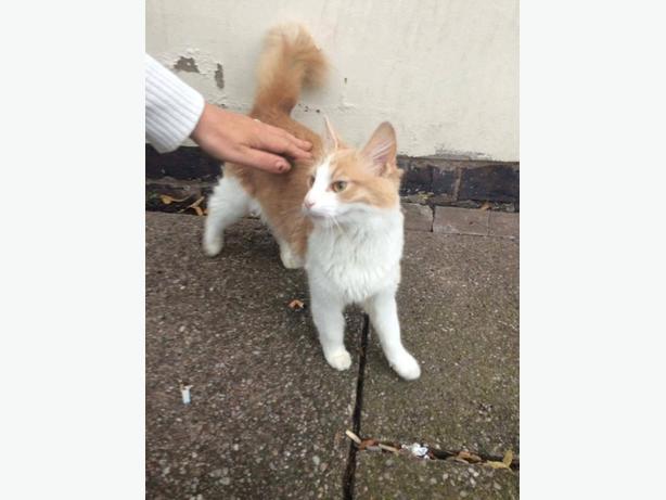 16month female cat
