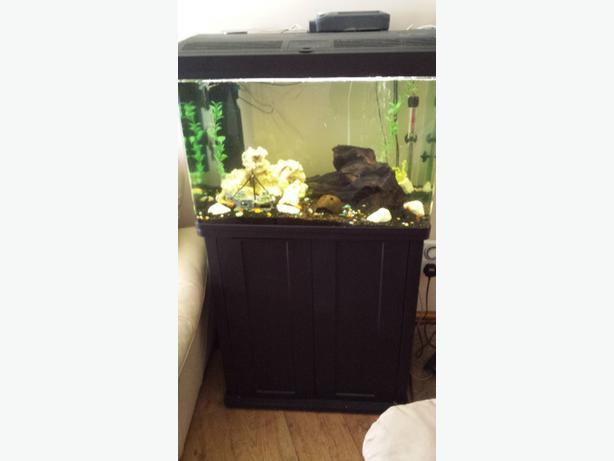 fish tank 100L