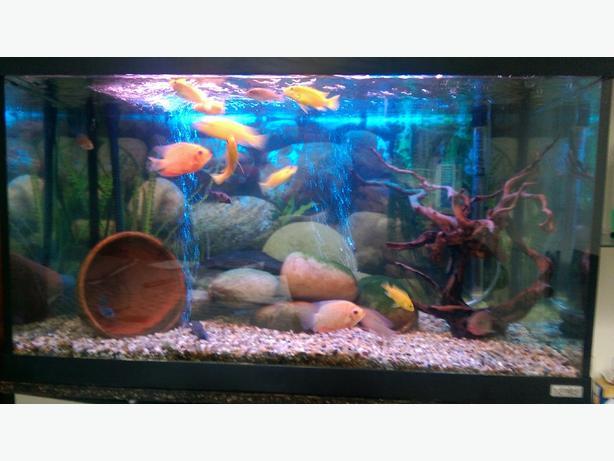 fluval fish tank full set up