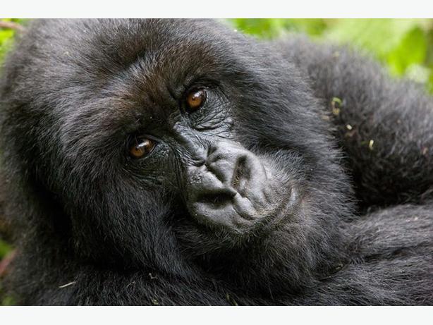 16 day Rwanda tour