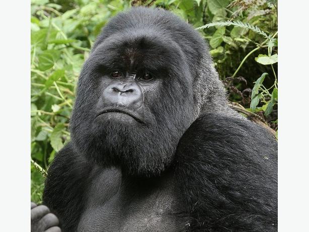3 day gorilla trekking in Uganda