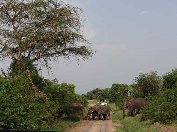 wildlife safari to Uganda