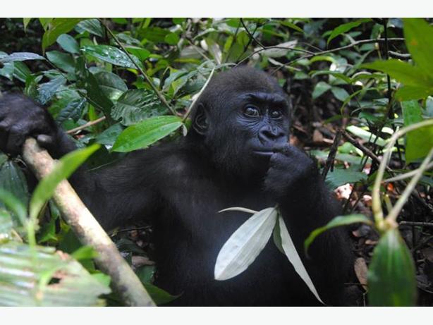 6 day Rwanda gorilla trekking