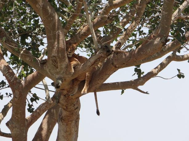 wildlife experience iin Uganda