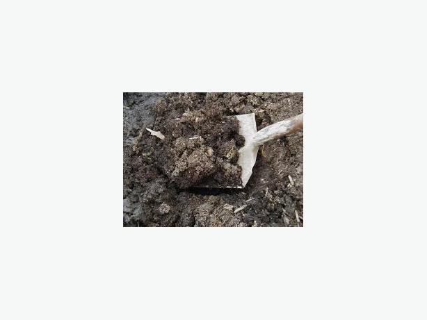 FREE: garden soil