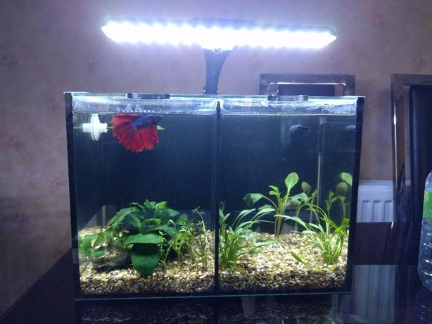 £85 Aqua one betta Duo (everything included)