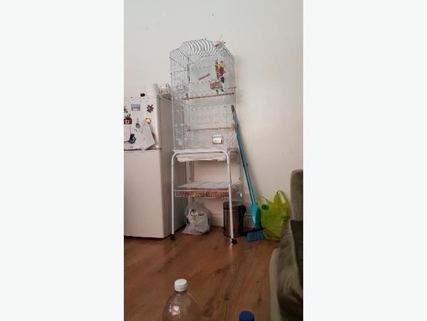 budgie n cage and accessories