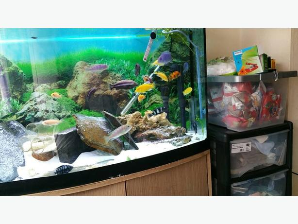 mix cichlids