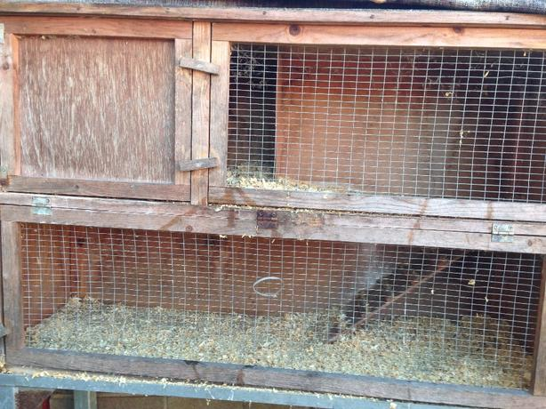 Guinea hutch for sale