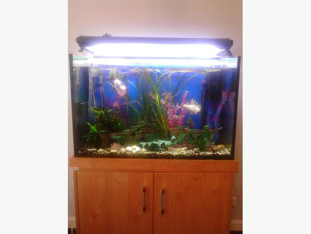3ft tropical fish tank full set up + fish