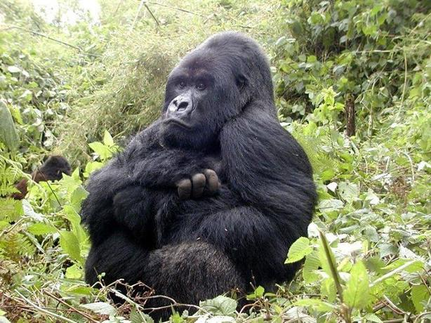 7 days and 6 nights Uganda and Rwanda gorilla trekking safari