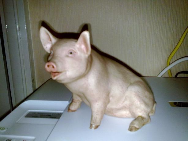 aynsley pig