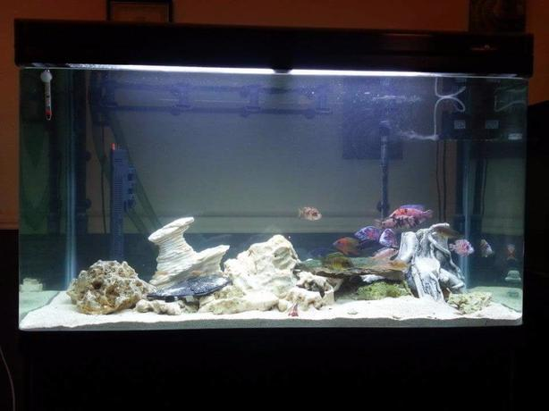 4ft fish tank, cabinet & extras