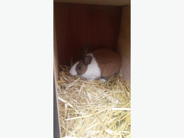 FREE RABBIT AND HUTCH