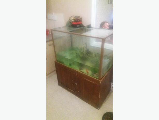 Large Fish tank & Accessories